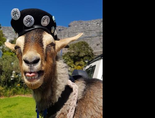 La Capra Goat Run
